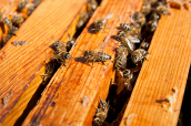 coonara-community-house-beekeeping